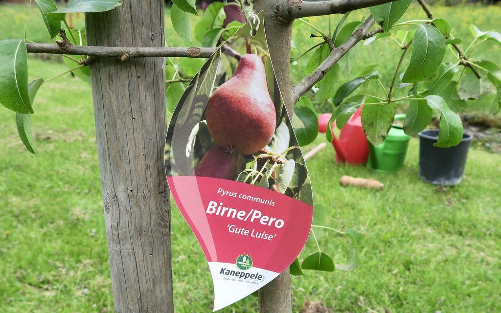 Il mio albero da frutta