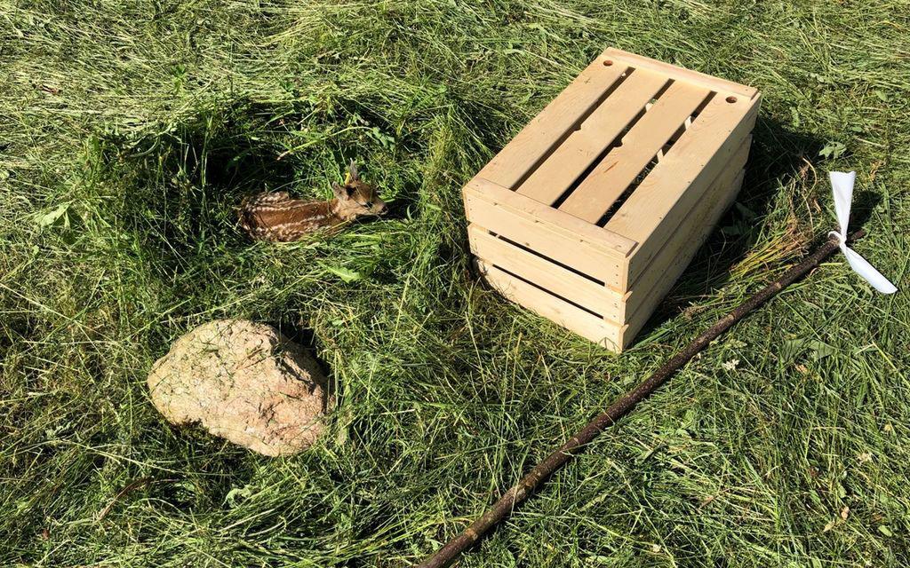 Cuccioli di caprioli salvati con droni