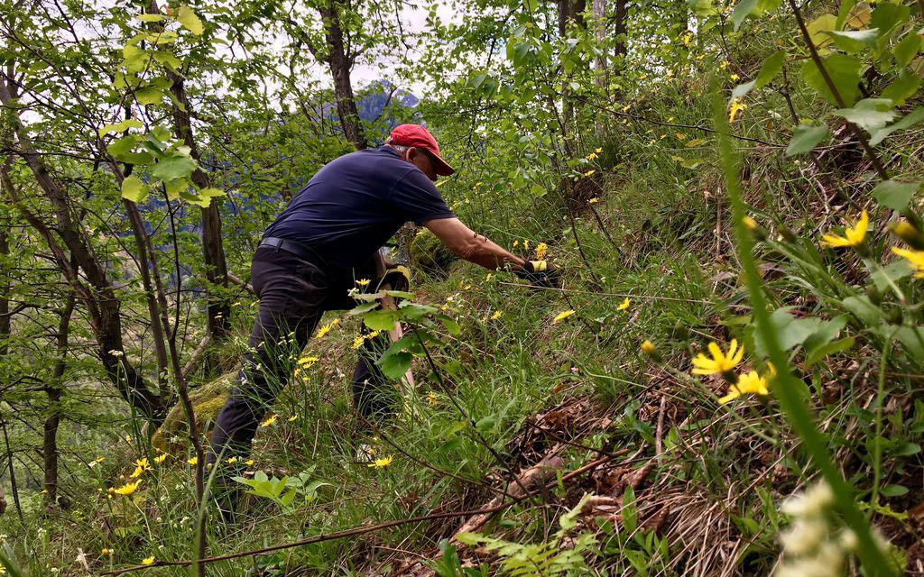 Impiego del Bergwaldprojekt a Soazza