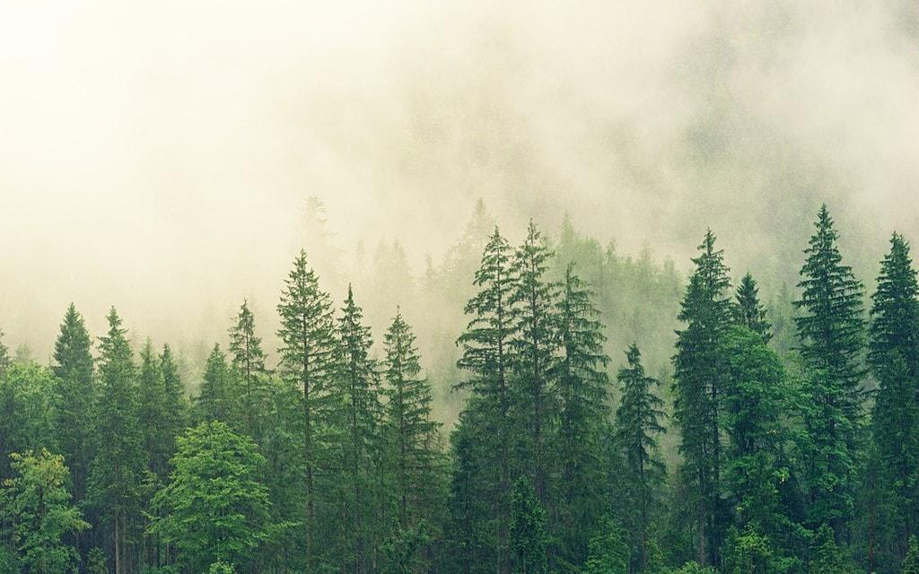 Cambia il clima, cambia il bosco