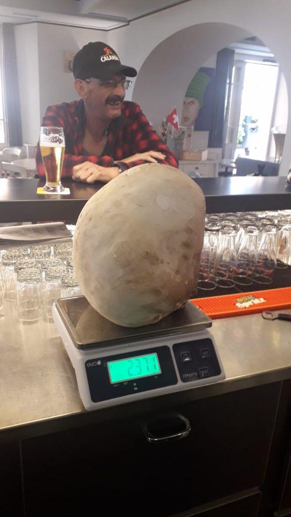 Fungo Gigante 820c6